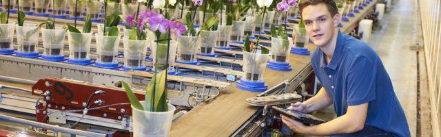 stage leerling werkt in een bloemenkwekerij
